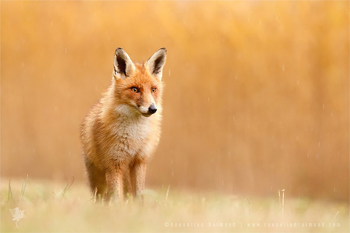 Blending in or Standing Out (From the Crowd) (© Roeselien Raimond)