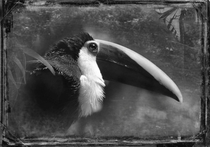 Antique Aviary (© Dianne Yudelson)