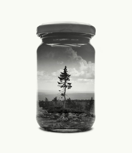 Jarred & Displaced – Tjikko (© Christoffer Relander)