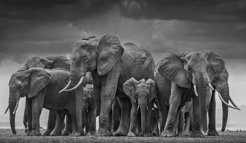 The Circle of Life (© David Yarrow)