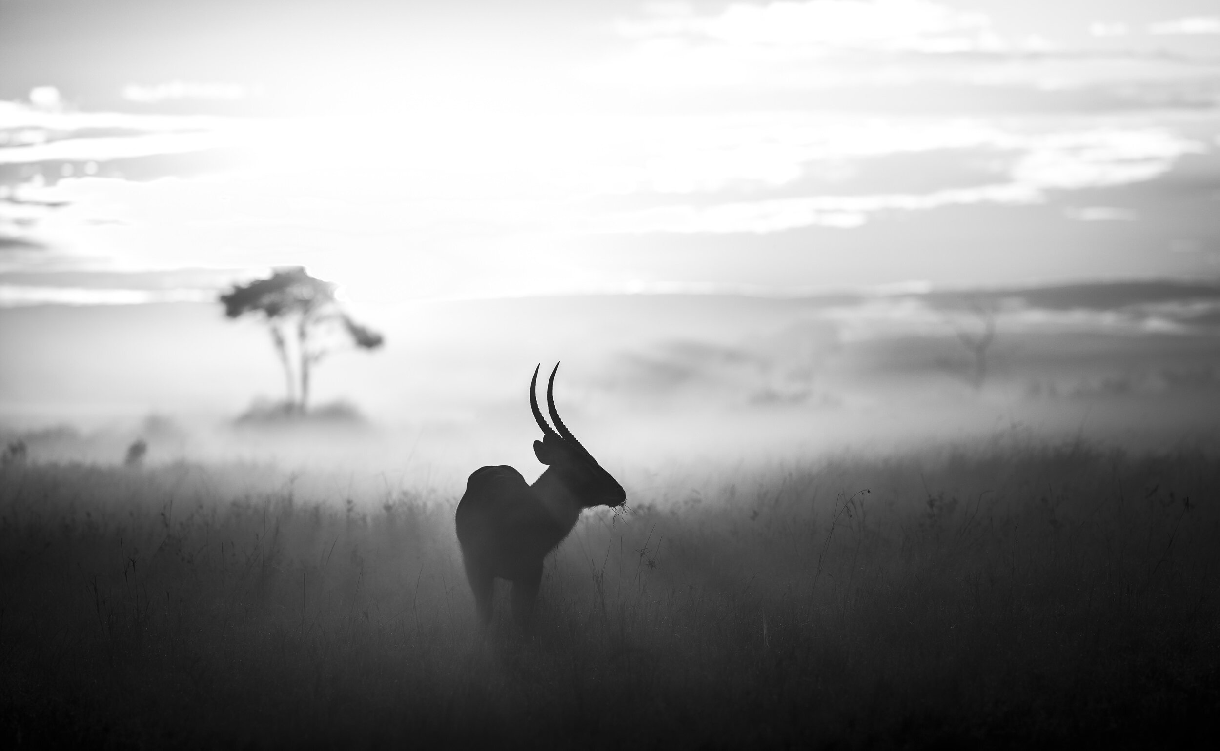 Africa in the Mist (© Graeme Purdy)